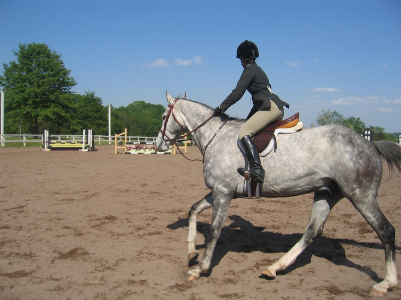 Enchanted Horse Dressage